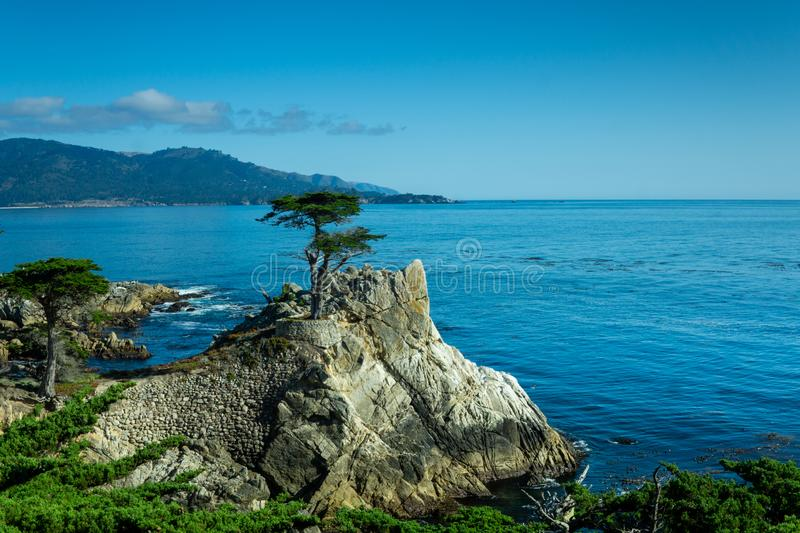 Pebble Beach, CA / United States - Aug 19, 2019: A landscape shot of the famous Lone Cypress, a Monterey cypress tree standing on royalty free stock photography