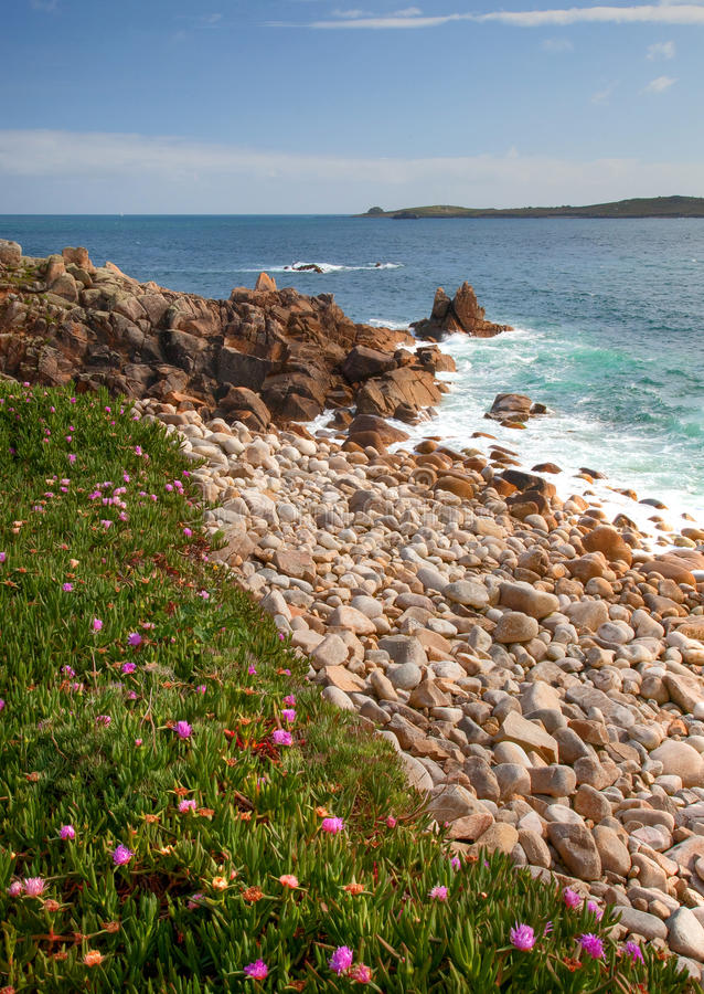 Download Pebble beach, Cornwall stock image. Image of flora, united - 24842905