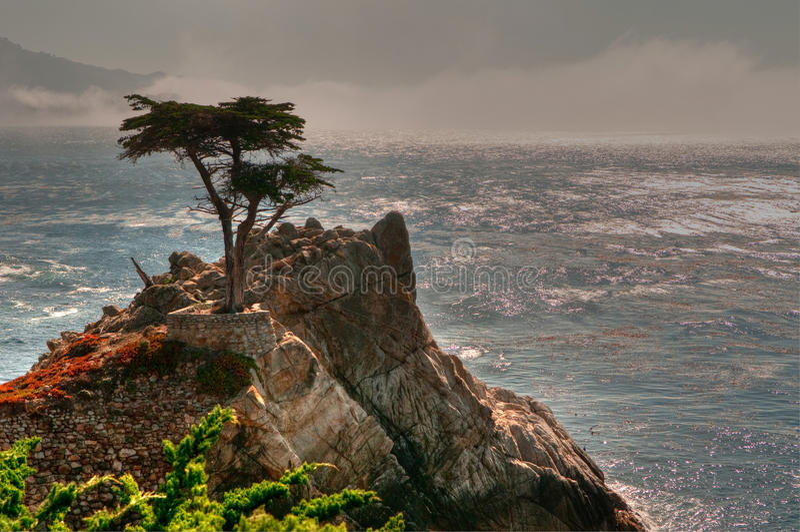 Pebble- Beacheinsamer Baum lizenzfreie stockfotografie