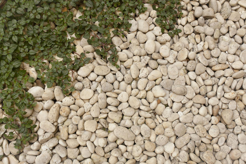 Pebble And Grass Royalty Free Stock Image