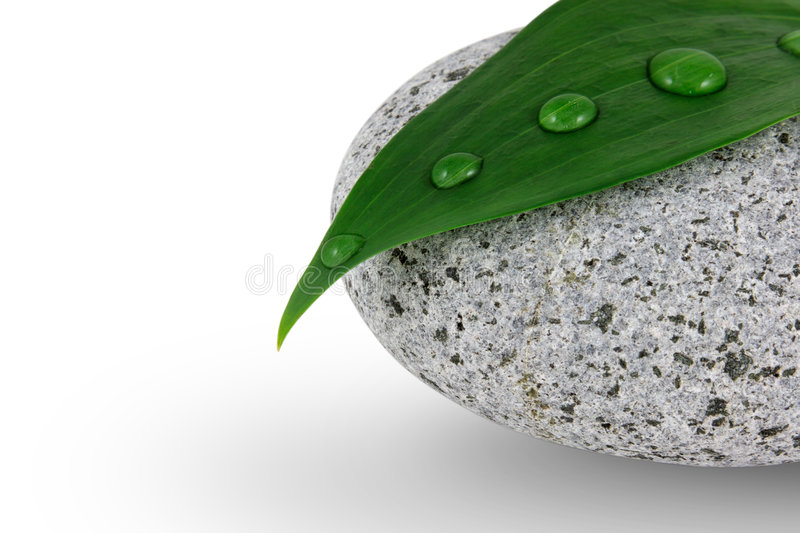 Pebble And Leaf Stock Photography