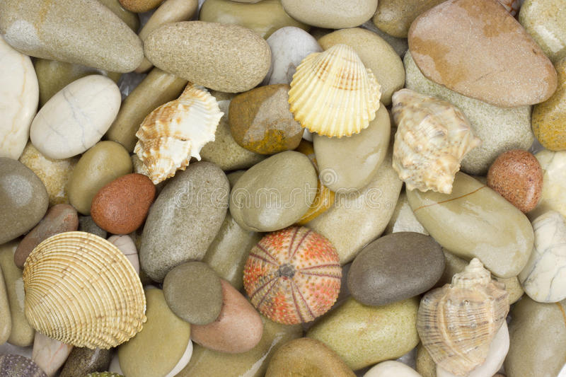 Pebble and sea shell. Background stock photography