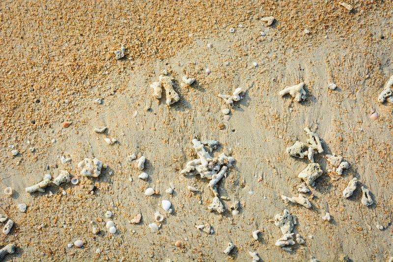 Pebble, sea shells and broken corals on the tropical yellow beach sand background stock photos