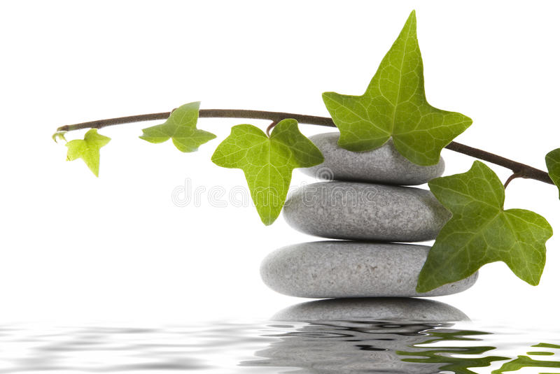Pebble Stack and Ivy stock image