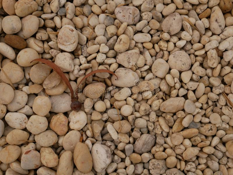 Pebble stone background, aroma stone in nature garden. Pebble stone pattern.pebbles beach stone outdoor garden , rock sand nature background royalty free stock photo