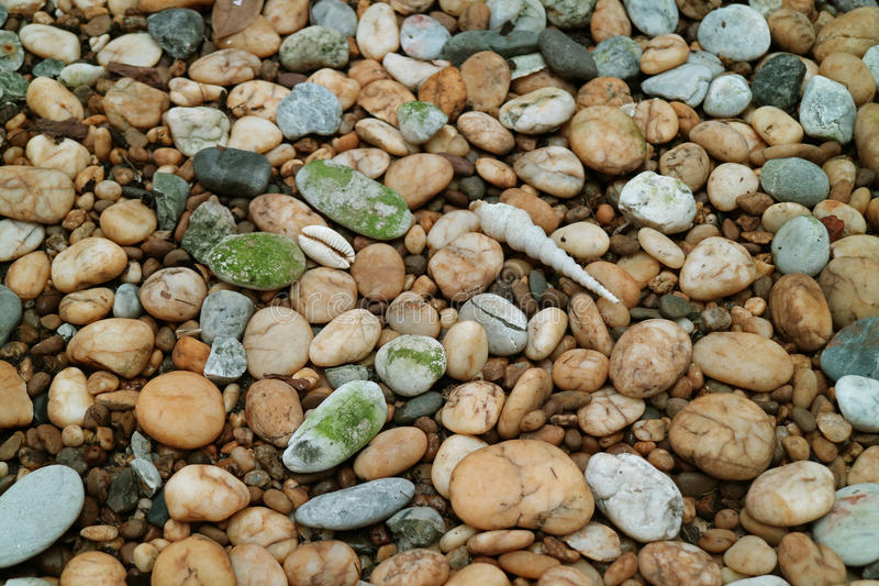 Pebble Stone Ground with Natural Sea Shells for Background stock images