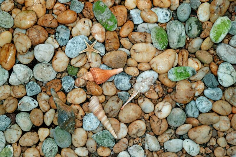 Pebble Stone Path with Tiny Seashells on the Beach stock photography