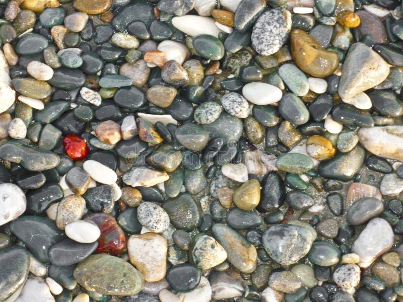 pebbled的海滩 图库摄影