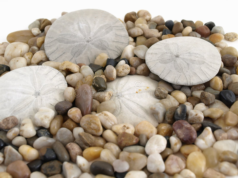 Pebbles and Sand Dollars royalty free stock photography