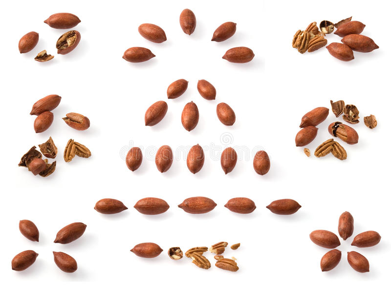Pecan collection stock images