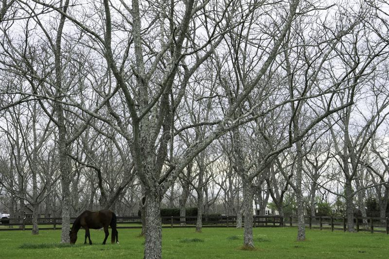 Pecan Farm in Fairhope, Alabama. Pecan Farm with a horse in Fairhope, Alabama stock images