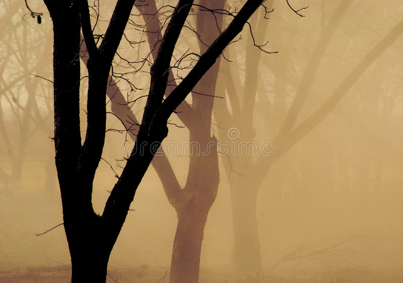 Pecan harvest. Visibility in a pecan grove south of Roswell, New Mexico is obscured as workers harvest their crop royalty free stock photo