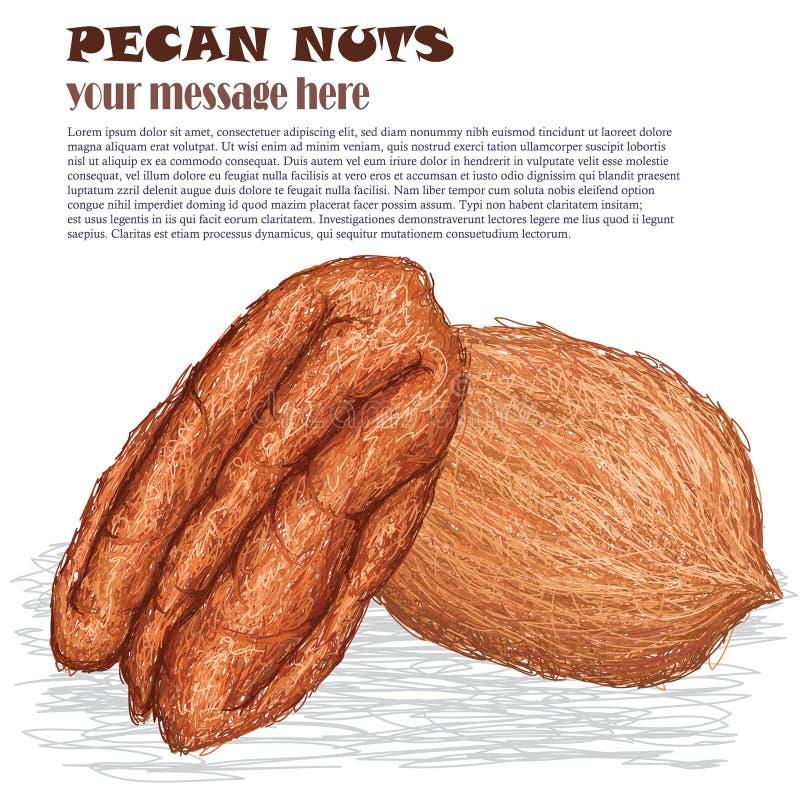 Download Pecan Nuts Stock Image - Image: 29538171