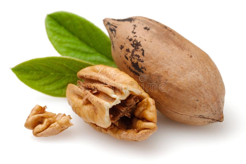 Pecan nuts and leaves isolated on white. Background stock image