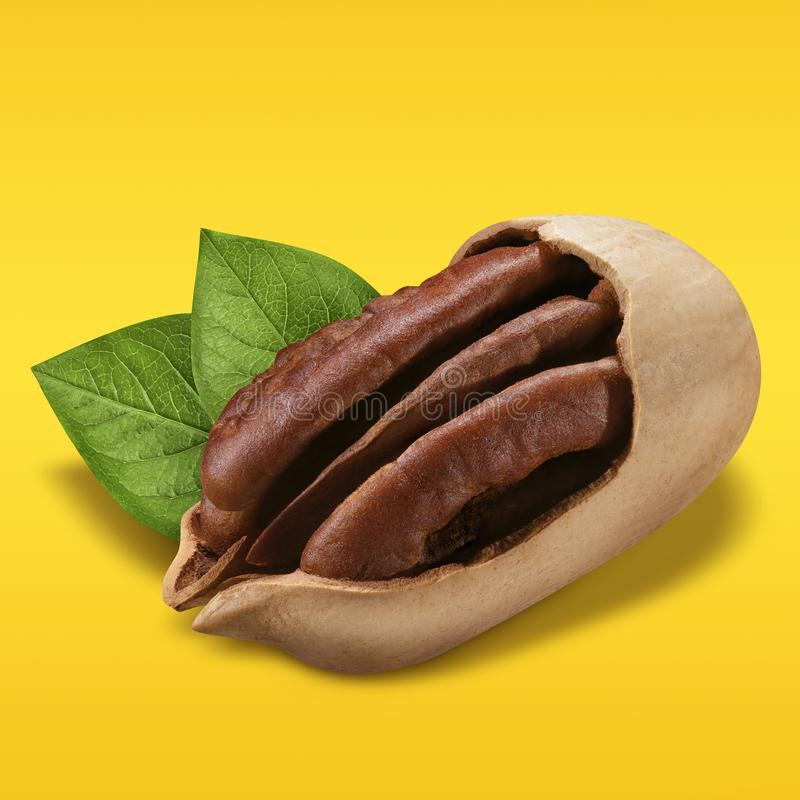 Pecan nuts on pastel yellow and orange background. Closeup one nuts pecan in shell with green leaves as package design. Element. Organic nut macro concept royalty free stock photos