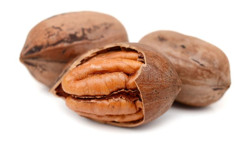 Pecan nuts. Isolated. Nature, eating royalty free stock photo