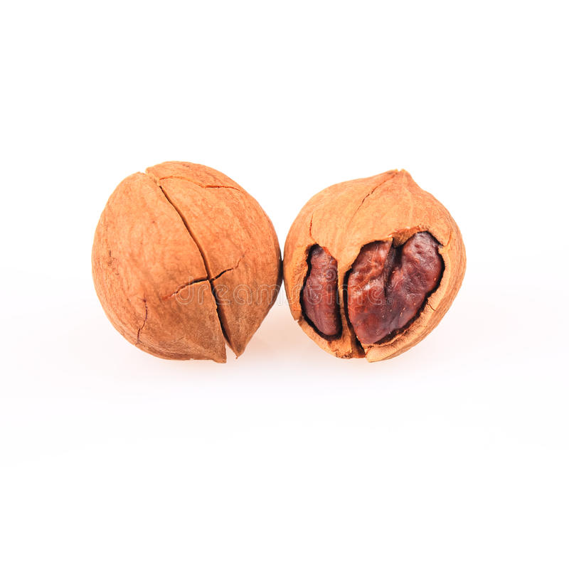 Pecan nuts. Two pecan nuts with white background , carya cathayensis stock photos