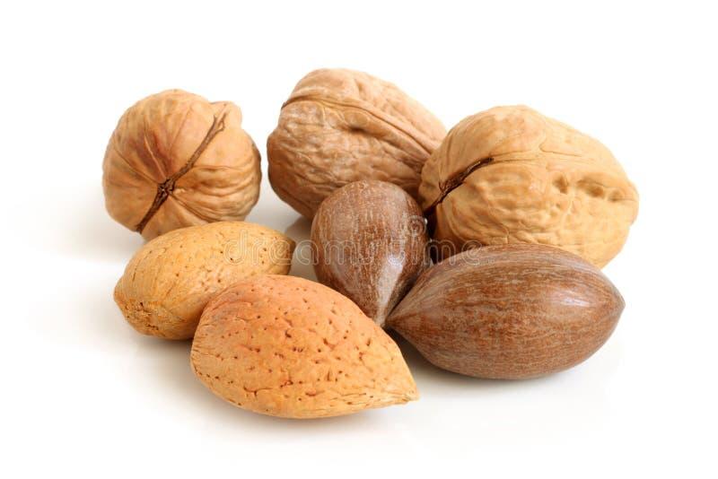 Pecannötmuttrar, valnötter och mandlar arkivbild