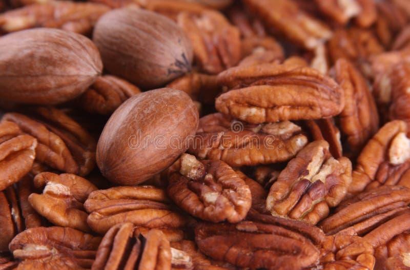 pecannötter arkivbild