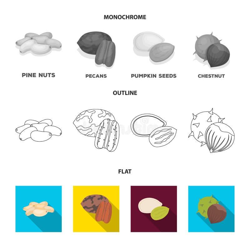 Pecannoot, pijnboomnoot, pompoenzaden, kastanje Verschillende soorten pictogrammen van de noten de vastgestelde inzameling in vla royalty-vrije illustratie