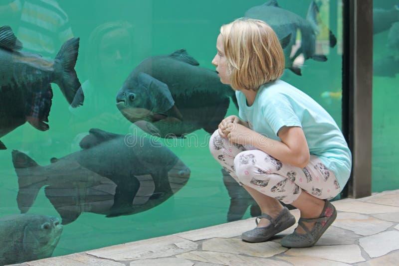Peces de mar de observación de la muchacha del niño en un acuario grande foto de archivo libre de regalías
