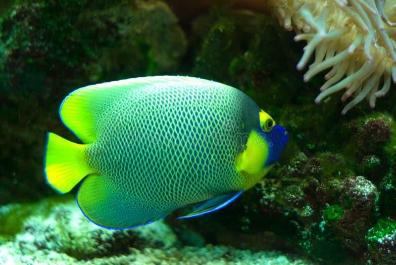 Peces marinos imagen de archivo imagen de subacu tico for Acuarios para peces marinos