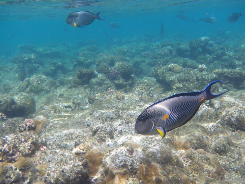 Peces marinos fotos de archivo