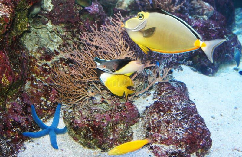 Peces marinos imagen de archivo