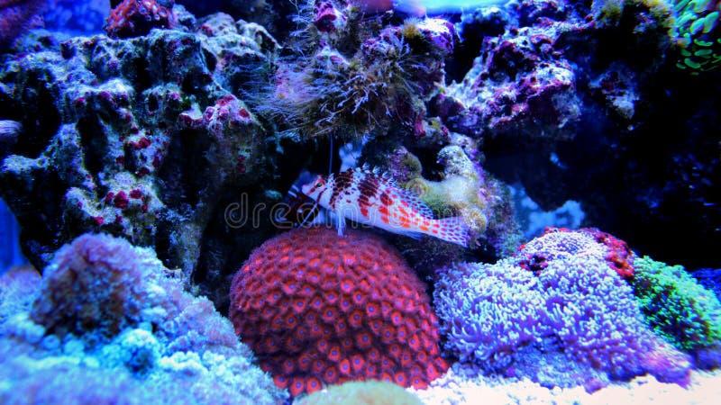Peces marinos en acuario marino fotos de archivo libres de regalías