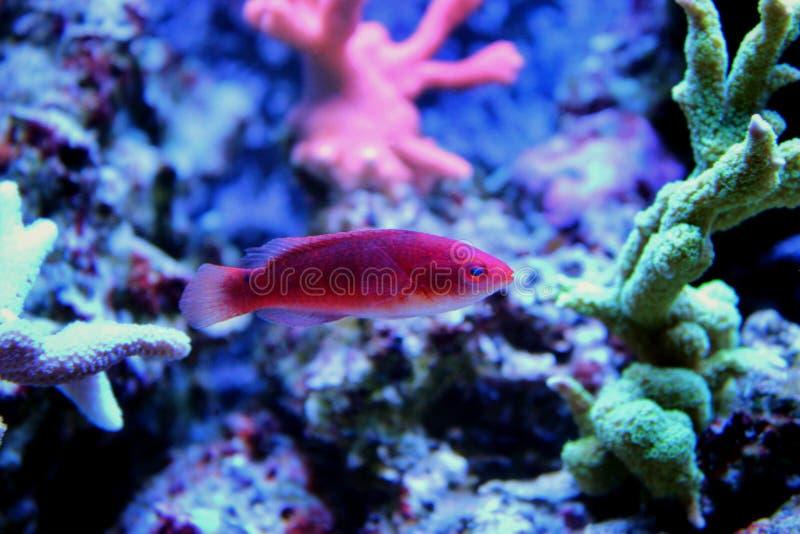 Peces marinos en acuario marino imagen de archivo libre de regalías