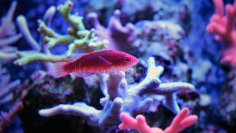 Peces marinos en acuario marino imagen de archivo