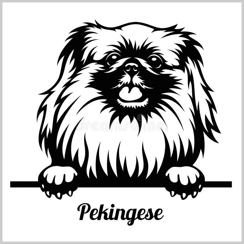 Pechinese - dando una occhiata ai cani - testa del fronte della razza isolata su bianco illustrazione vettoriale