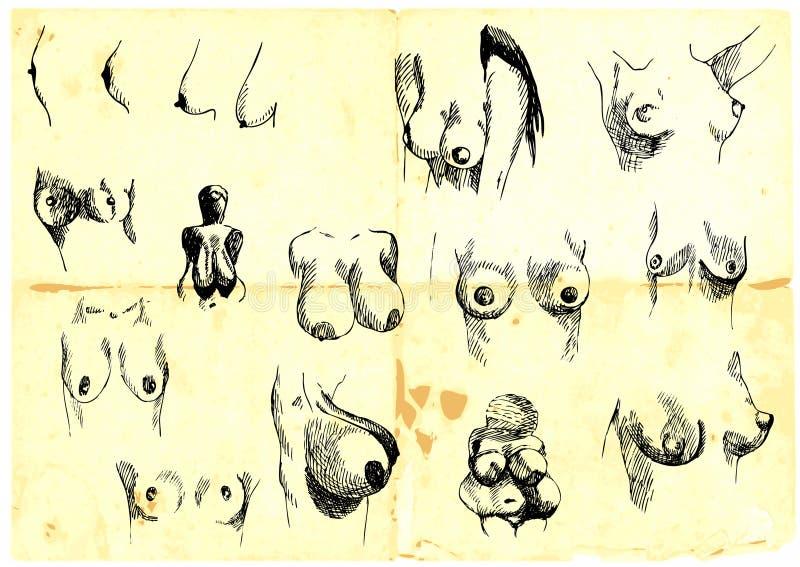 Pechos femeninos ilustración del vector. Ilustración de nude - 24061393