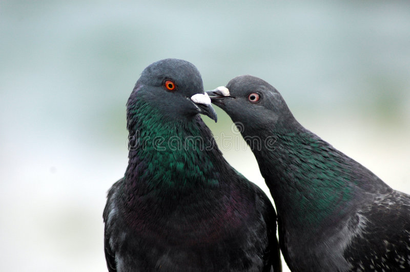 Download Peck on the Cheek stock image. Image of smooch, valentine - 463373