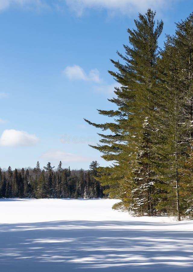 Peck Lake congelado no parque do Algonquin no inverno foto de stock royalty free