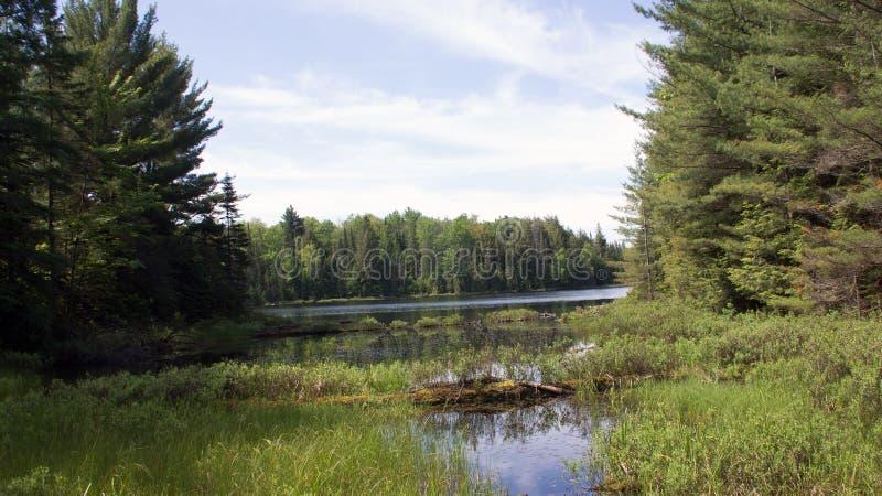 Peck Lake, parque provincial 5 do Algonquin foto de stock