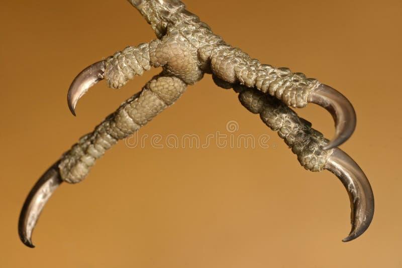 Pecker de madeira arborizado imagem de stock royalty free