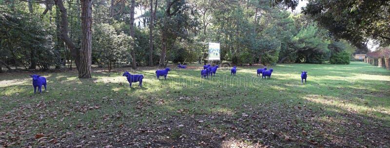 pecore blu immagine stock libera da diritti