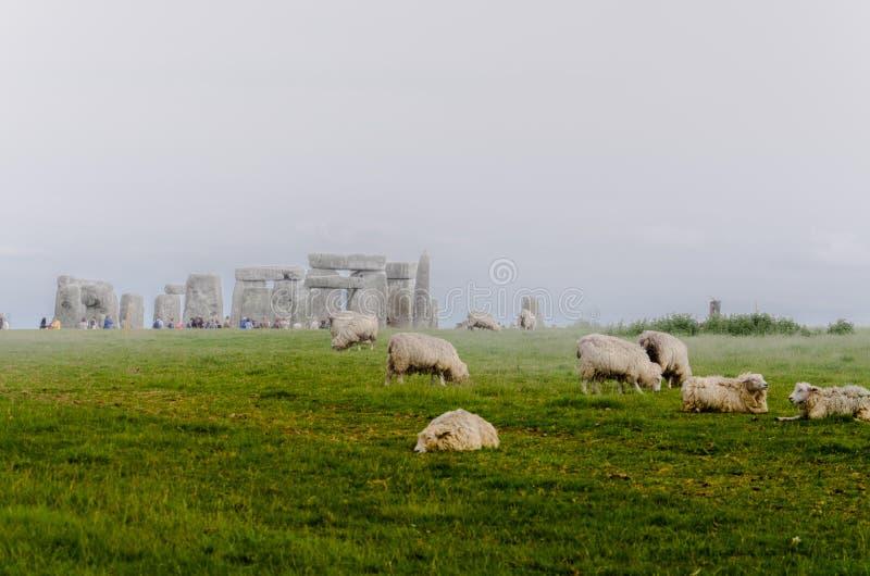 Pecore che pascono ad uno Stonehenge nebbioso fotografia stock