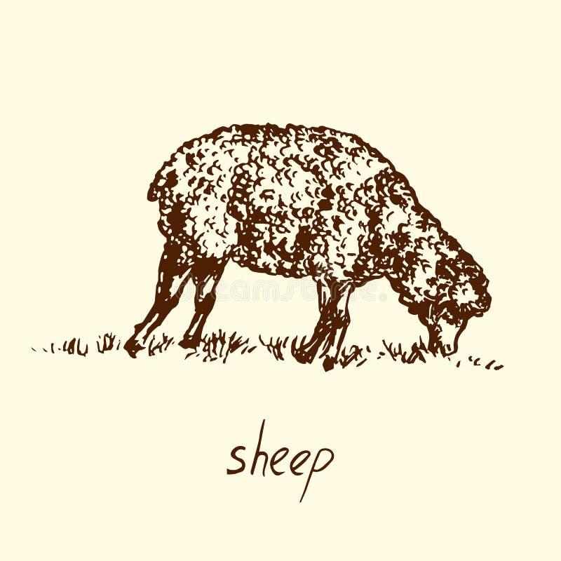 Pecore che stanno e che pascono vista laterale, scarabocchio disegnato a mano, schizzo, illustrazione di vettore illustrazione vettoriale