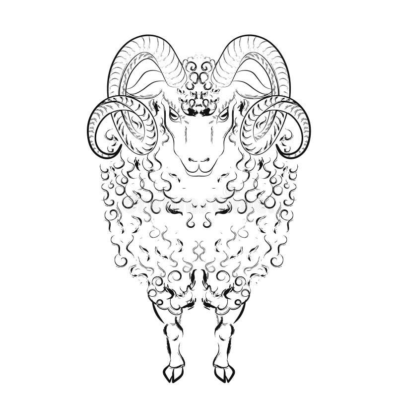 Pecore con le serrature lunghe della lana ed i corni curvi illustrazione di stock