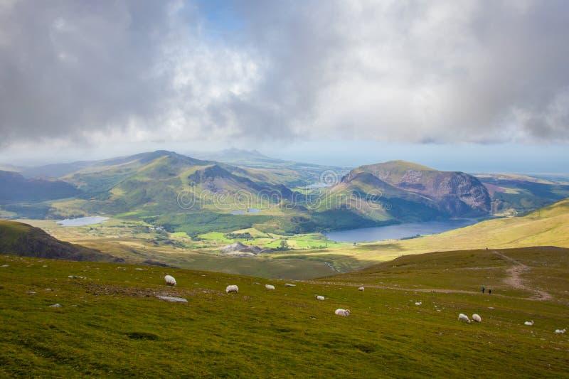 Pecore da snowdon immagini stock