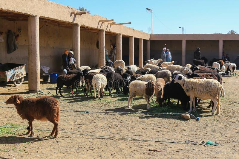 Pecore della lana da vendere immagine stock