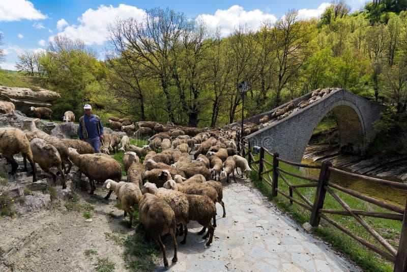 Pecore in Grecia fotografie stock libere da diritti