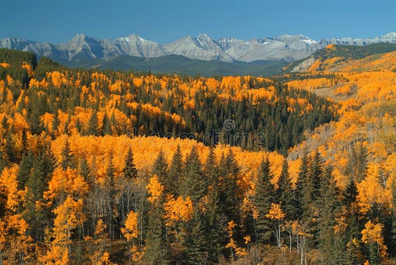 Pecore River Valley, Alberta fotografia stock