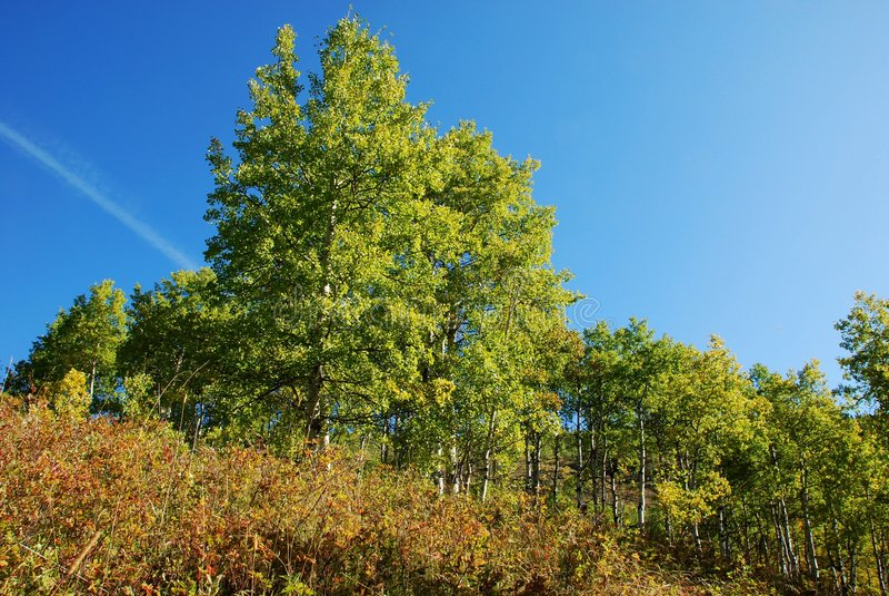 Download Pecore River Valley In Autunno Immagine Stock - Immagine di erba, highway: 7306773