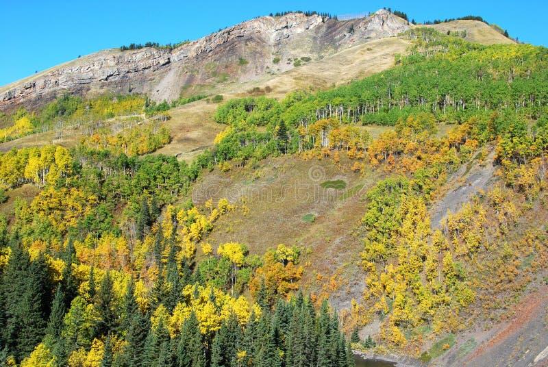 Download Pecore River Valley In Autunno Fotografia Stock - Immagine di mammifero, canadese: 7306836