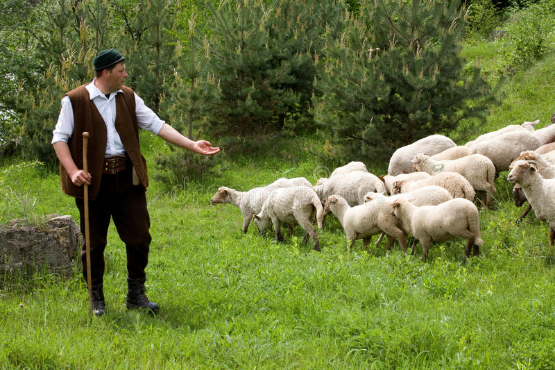 Pecore sentite fotografie stock libere da diritti