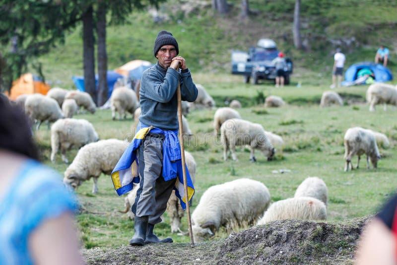 Pecore sentite immagini stock