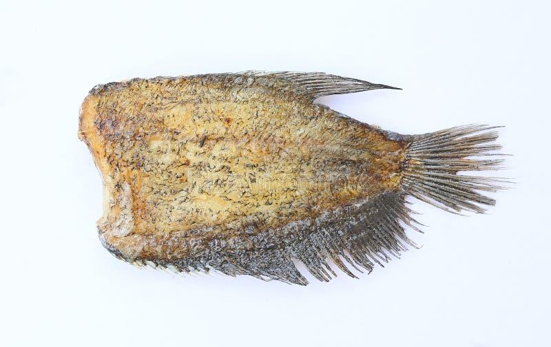 Pectoralis de Fried Trichogaster, alimento tailand?s fritado dos peixes do salid, isolado fotos de stock royalty free